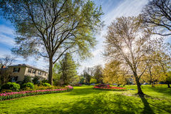 The sun shining through trees at Sherwood Gardens Park, in Baltimore, Maryland. stock photography
