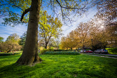 The sun shining through trees at Sherwood Gardens Park, in Baltimore, Maryland. stock image