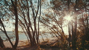 Sun shining through the trees. Shot of the sun shining through the trees stock video footage