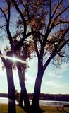 Sun shining through trees Stock Images