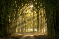 Sun shining through the trees. On a sand path stock photography