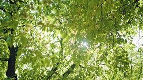 Sun Shining Through the Trees. stock video