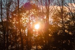 Sun shining through the trees on a sunny fall day. Close to sunset stock photos