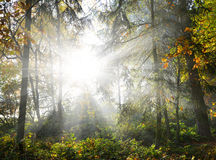 Sun shining through trees in a woods Stock Images
