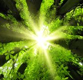 Sun shining through treetops Stock Images