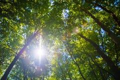 Sun shining through treetops Royalty Free Stock Photography
