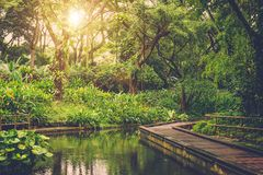 Sun shining into tropical jungle Royalty Free Stock Photography