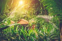 Sun shining into tropical jungle Royalty Free Stock Photos