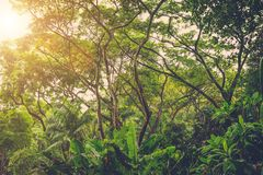 Sun shining into tropical jungle Stock Photography
