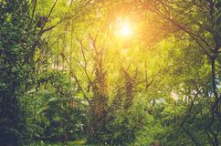 Sun shining into tropical jungle Royalty Free Stock Photo