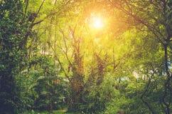 Sun shining into tropical jungle Royalty Free Stock Photo