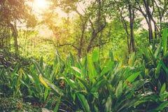 Sun shining into tropical jungle Stock Photos