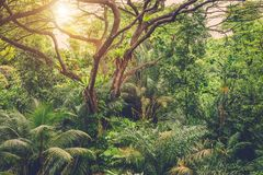 Sun shining into tropical jungle Stock Photo