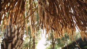 Sun shining through tropical palm leaves stock video