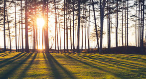 Sun is shining trough trees, blurred background Stock Image