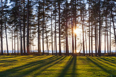 Sun is shining trough trees on the coast Stock Image