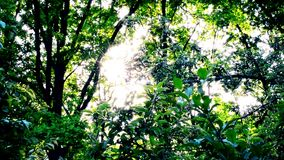 Sun shining through vibrant bright lush green foliage of trees stock footage
