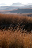 Sun Shining on Winter Grass in Orange Free State, South Africa Stock Image