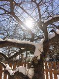 Sun shining through Winter tree. The sun shines brightly through the branches of a small tree, covered with winter snow Royalty Free Stock Photo