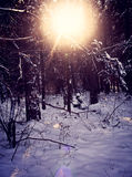 Sun shining in winter wood, back light with snow Royalty Free Stock Photos