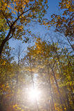 Sun Shining in the Woods Royalty Free Stock Images