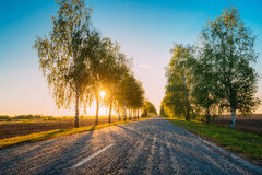 Sun Shining Through Woods Over Asphalt Country Open Road In Sunn Stock Images
