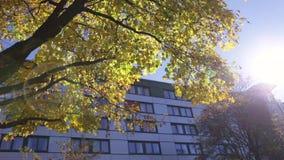 Sun shinning dans Autumn Morning banque de vidéos