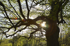 Sun Shinning Through Tree Branches Stock Photography