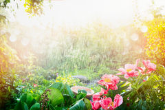 Sun shower in flower garden. Rain with sunshine in garden or park , outdoor nature background Stock Image