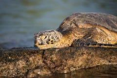 sun sköldpaddan Arkivbilder