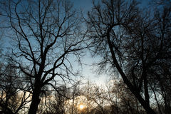 Sun in the sky and background of tree branches. Sunset time.  Stock Image