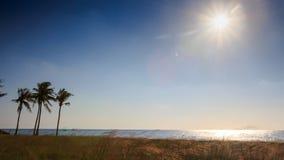 Sun in Sky over Sea Sunlight Reflection Palms Grass on Beach stock video footage