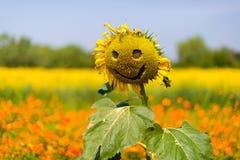 Sun Smile. Smile on sunflower in jim thompson farm thailand Stock Photos