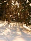 Sun and Snow. Sun light peeking through the pine trees Stock Photo