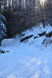 Sun & snow in the forest. Beautiful morning in the forest - snowy path Stock Photos