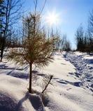 Sun Snow Pine trail Stock Image