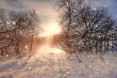 Sun and snowflakes. Sunny winter morning on a river. Sunny winter morning on a river Svisloch, Belarus Royalty Free Stock Photo