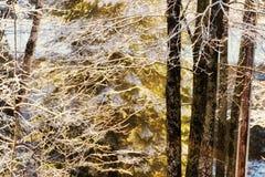 Sun-snowshower Royalty Free Stock Photo