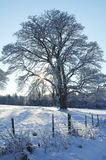 Sun on snowy meadow. Meadow ith tree and fence in foreground in the snow with winter sun and shadows Royalty Free Stock Photos