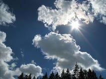 Sun sobre el bosque Fotografía de archivo libre de regalías
