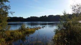 Sun sobre el río de UmeÃ¥, Suecia Foto de archivo libre de regalías