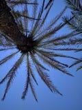 Sun sobre la palmera Creta foto de archivo