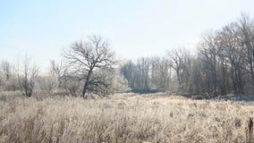Sun sobre los prados, los arbustos y los árboles cubiertos con paisaje fabuloso del invierno de la helada almacen de video