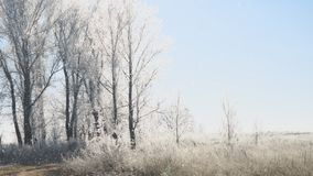 Sun sobre los prados, los arbustos y los árboles cubiertos con paisaje fabuloso del invierno de la helada almacen de metraje de vídeo