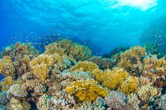 Sun sobre o recife de corais egípcio fotos de stock