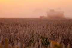 Sun sobre trigo de la cosecha mecanizada y el remolque de relleno foto de archivo libre de regalías