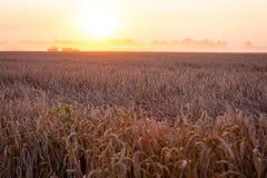 Sun sobre trigo de la cosecha mecanizada y el remolque de relleno fotografía de archivo libre de regalías