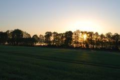 Sun-Sonnenaufgang das Feld Lizenzfreie Stockfotos