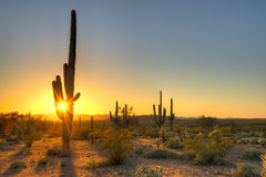 Sun. Sonoran Desert catching day's last rays Royalty Free Stock Image