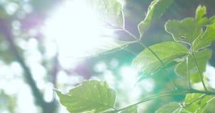 Sun sopra le foglie stock footage